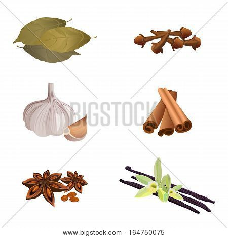 Collection of dry aromatic herbs for preparing dishes on white. Vector illustration of garlic , cinnamon sticks, dried cloves, bay leaves, anise star, vanilla. Spices for cooking and taste enhancement