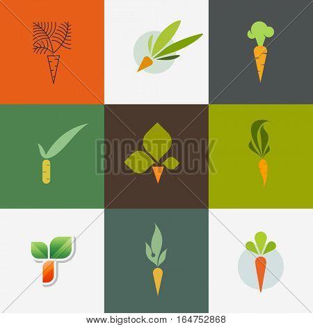 Carrot. Set of decorative design elements