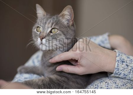 Beautiful tabby cat being held and cuddled by its owner enjoying and purring