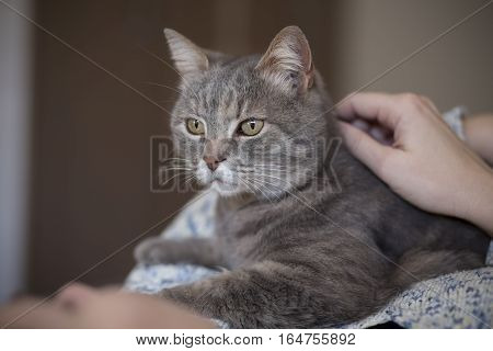 Woman holding her tabby cat pet and cuddling it