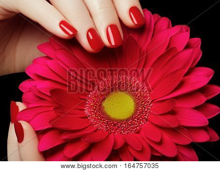 Beauty Salon. Delicate Hands With Manicure Holding Pink Flower