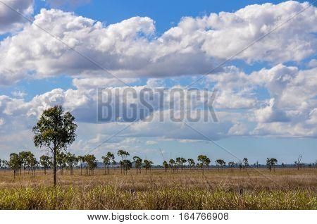 Bushy Landscape In The Outback, Queensland, Australia