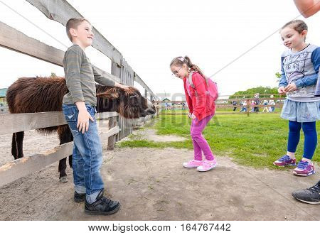Kiev, Ukraine - July 20, 2016: Children at the farm zoo to feed the animals. Pupils feed the donkey on the farm