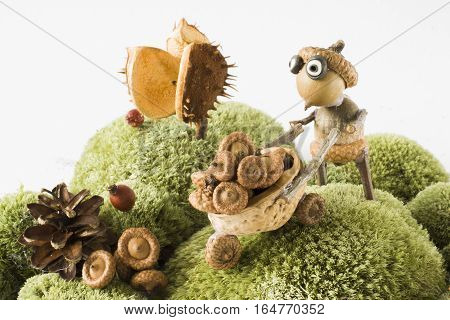 little garden helper with handcart harvesting acorns autumn season background