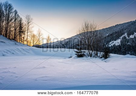 Trees On Snowy Meadow In Mountains