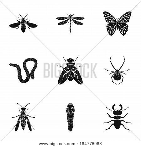 Insects set icons in black design. Big collection of insects vector symbol stock illustration