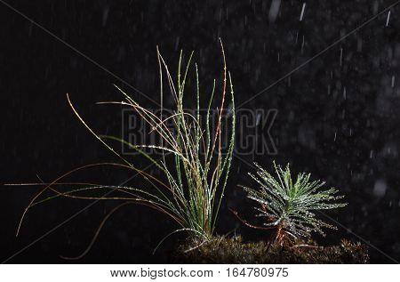 Macro Of Rain In Forest