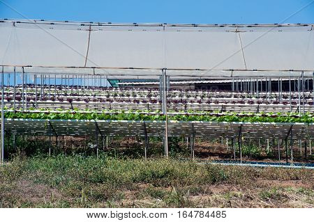 Hydroponics is a subset of hydroculture, the method of growing plants without soil, using mineral nutrient solutions in a water solvent. Terrestrial plants may be grown with only their roots exposed to the mineral solution.