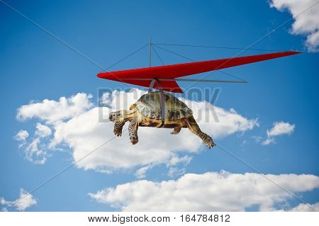 Funny turtle flying on hang-glider in the sky