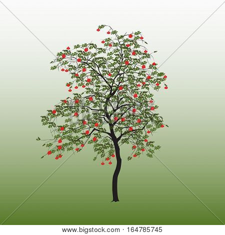 Mountain Ash With Green Leaves