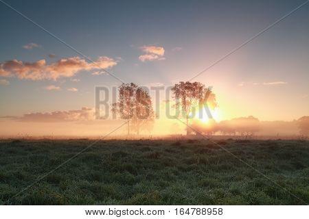 beautiful misty sunrise behind trees on grassland