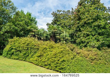 Green bushes and trees. Nature and sky at daytime. Rest and breathe fresh air.