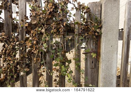 Old Rustic Garden Gate