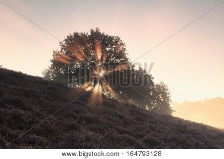 foggy sunbeams through oak tree on hill