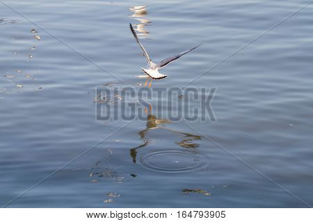 white seagull flying on a background of blue sea