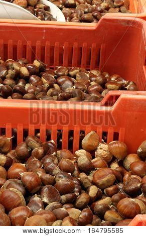 Boxes Full Of Chestnuts For Sale