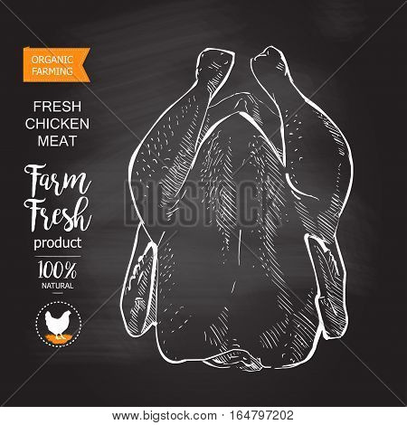 Fresh chicken meat. Top view. Isolated on a white vintage vector isolated sketch hand drown chalk drawing on the blackboard