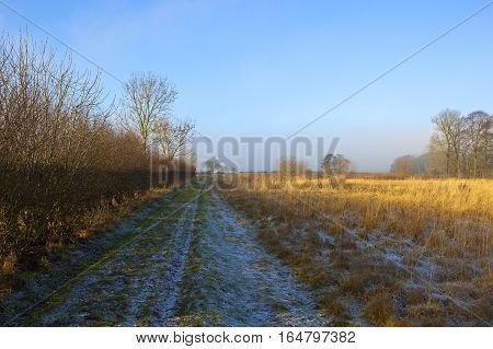 Dry Golden Grasses And Footpath