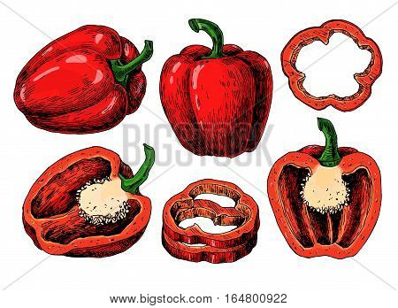 Pepper hand drawn vector set. Vegetable Isolated object full, half and slices bell pepper. Detailed vegetarian food drawing. Farm market product. Paprika icon