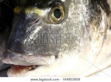 Bream With His Mouth Open Just Caught