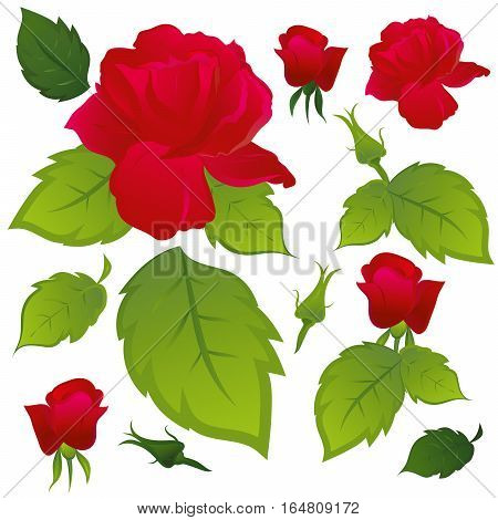 Red roses with green leaves. Part of the pattern. Isolated white background.