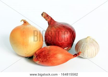 Various types of onions: onion red onion shallot and garlic - isolated against white background