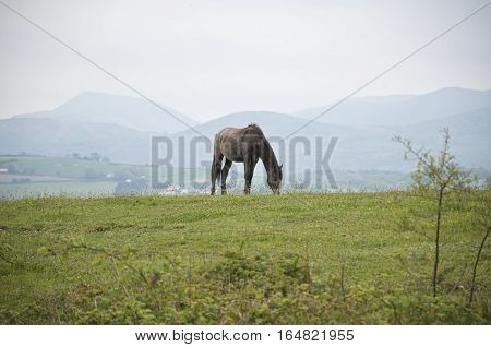 Brown horse lone on a hill with mountains in the  background, green field grazing Europe