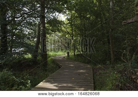 Wooden boardwalk through a forest, trees and plants