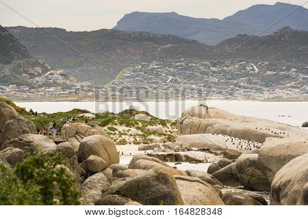 African Penguins On Boulders Beach In South Africa