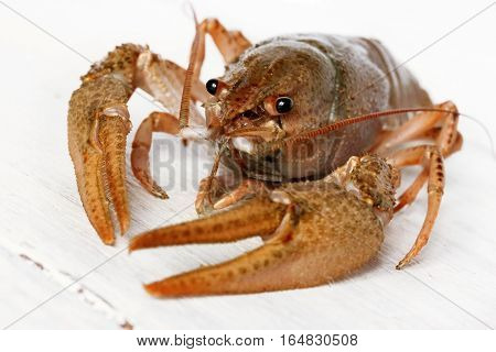 Crayfish on a white background close up