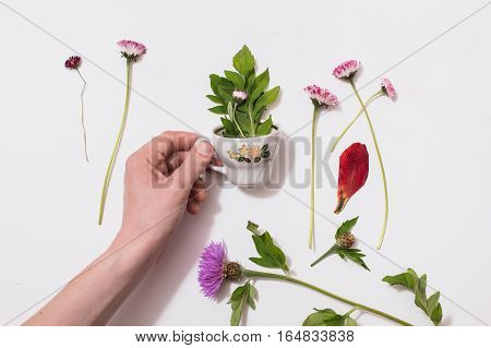 Flower small circle in a man's hand with a composition of wild purple flowers on isolated background .Chay of nature. Concept. Summer atmosphere. Tea party with the flora.