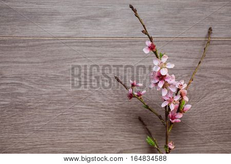 Border from fresh fragrant flowers cherry on retro background. Selective focus. Space for text. Flowering cherry on a wooden surface . Sakura . A branch of pink cherry blossoms in the left part of the composition
