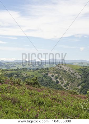 Summer rolling hills portrait, Snowdonia mountains in the background, beautiful flowers and green fields, bluff UK Wales