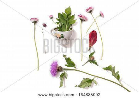 Flower small cup with leaves inside and purple wild flowers on an isolated background. Dried rose petal. Concept. Summer atmosphere. Tea party with the flora. Network of nature