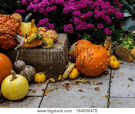 Autumn scene with gourds, pumpkins, and a squirrel