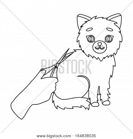 Grooming of a cat icon in outline design isolated on white background. Veterinary clinic symbol stock vector illustration.