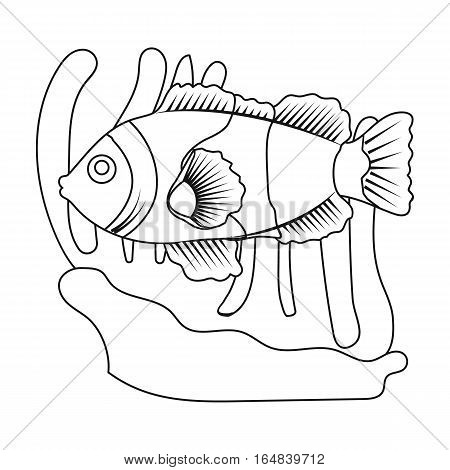 Clownfish and anemone icon in outline design isolated on white background. Australia symbol stock vector illustration.