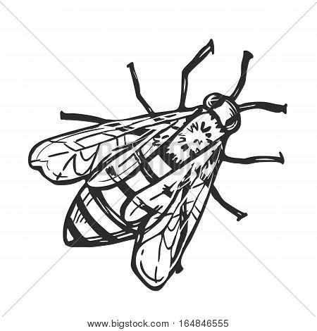 Honey bee freehand pencil drawing isolated on white background vector illustration. Bumble bee monochrome sketch, flying insect design element. Honey bee sign in vintage style. Hand drawn honey bee. Honey bee icon.