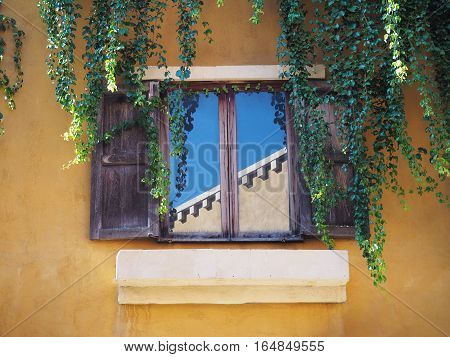 Wooden vintage window on concrete wall with creeper leaves plant