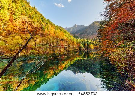 Amazing View Of Autumn Forest Reflected In The Five Flower Lake