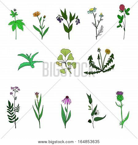 vector set of hand drawn medical herbs, line drawing plants, isolated floral elements