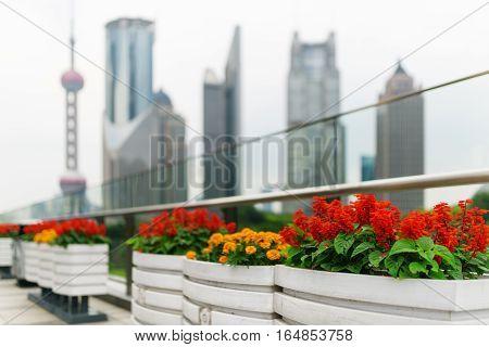 Outdoor Flower Pots On Pedestrian Side Of Century Avenue