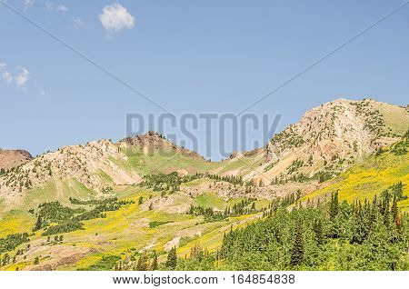 Beautiful shades of yellow and green in the Wasatch Mountains in Utah in the summer