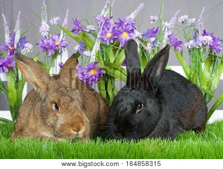 Pair of bunnies one brown one black laying in green grass in front of a white picket fence with purple flowers by a gray wall