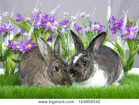 Pair of bunnies gray and white and brown sitting in green grass in front of a white picket fence with purple flowers by a gray wall