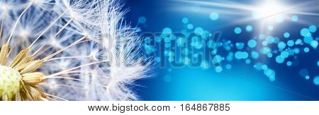Macro shot of a dandelion flower with a bright blue background
