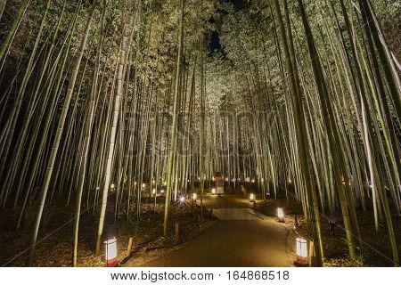 Lantern And Light Festival In Arashiyama Area