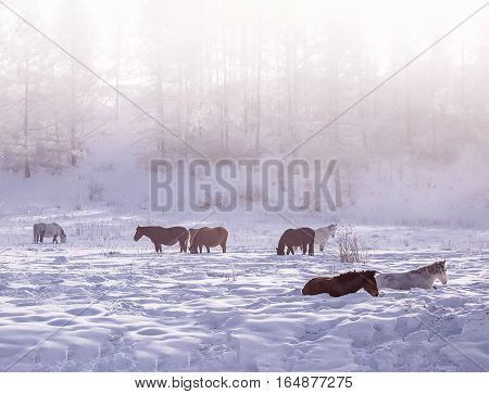 group of wild horses in the pasture with mountains in the background