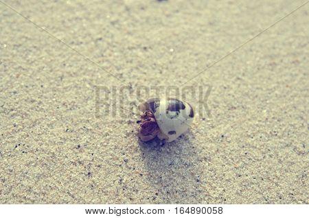 hermit crab on sand beach vintage tone