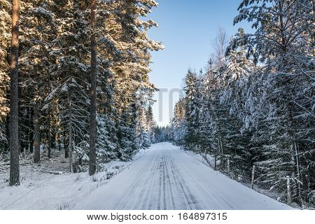View of a slippery winter road on the Swedish country side snow and ice hanging from the trees. Sun is shining.